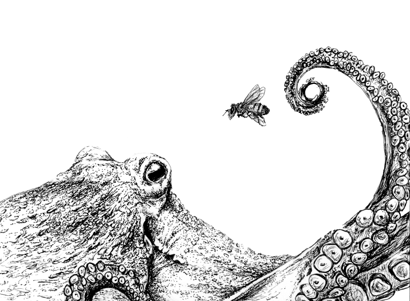 line drawing of an octopus and a bee